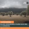 Salmo: donazione di 10.000 ulivi per la Sardegna.